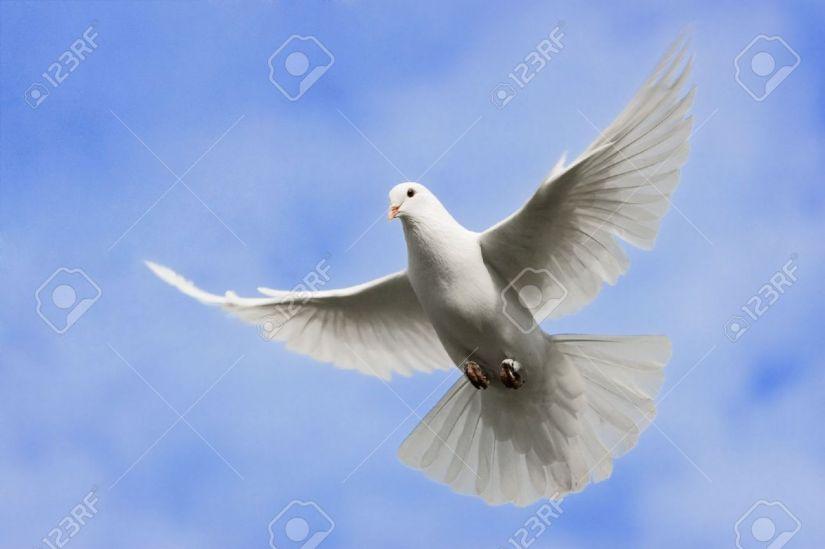 4538016-Paloma-blanca-volando-en-el-cielo-sobre--Foto-de-archivo