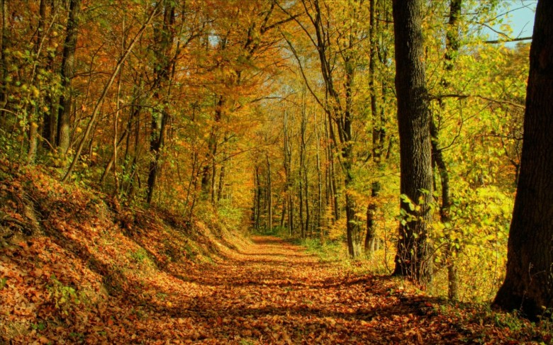 Xgolden-woods-autumn-forest-wallpaper-click-to-view-1280x800