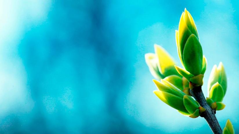 Greenish Blue HD Wallpapers (5)